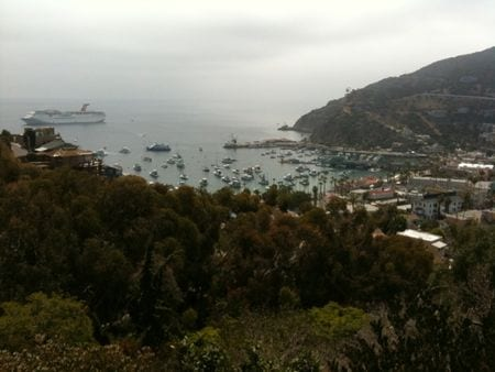 Elation in catalina