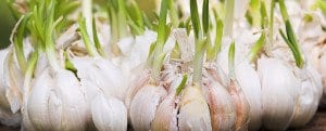 Reconstructing Garlic As A Whole Food