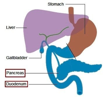 Pancreas and Duodenum